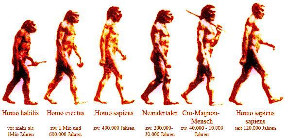 Was Heißt Evolution
